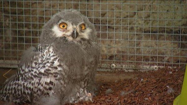 Paris plus de 50 naissances d 39 animaux au jardin des for Jardin animaux paris